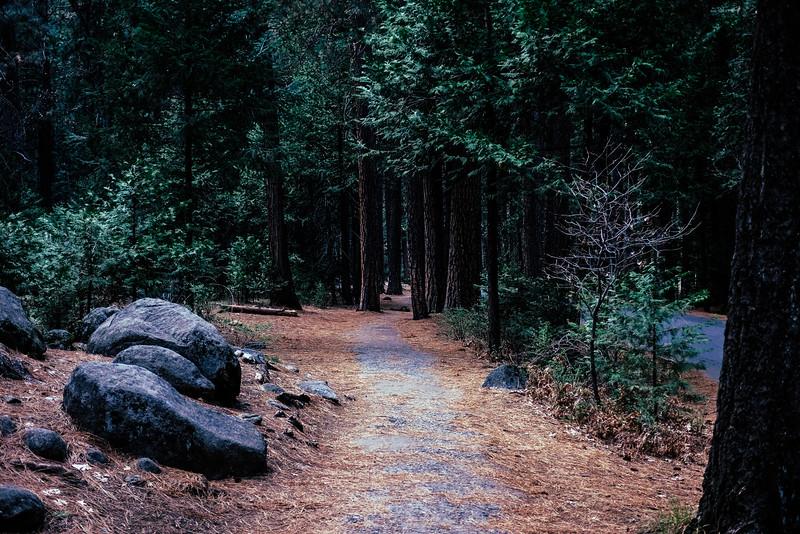 A path through Yosemite National Park